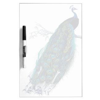 Pavo real azul con las plumas de cola hermosas pizarra blanca