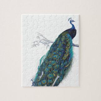 Pavo real azul con las plumas de cola hermosas puzzle con fotos