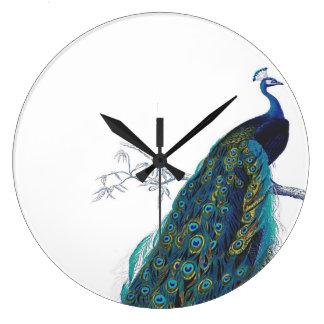 Pavo real azul con las plumas de cola hermosas reloj