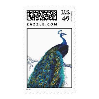 Pavo real azul con las plumas de cola hermosas sello