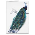 Pavo real azul con las plumas de cola hermosas tarjeta de felicitación