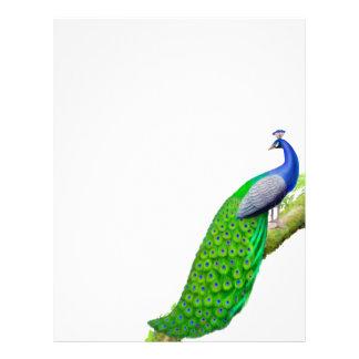 Pavo real azul indio en papel con membrete de la r plantillas de membrete