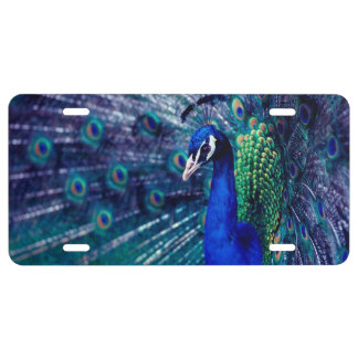 Pavo real azul placa de matrícula