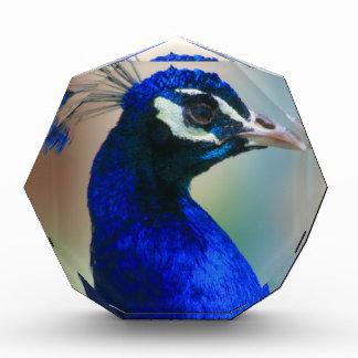 pavo real azul vivo