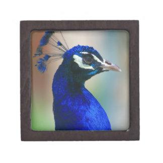 pavo real azul vivo cajas de joyas de calidad