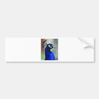 pavo real azul vivo pegatina de parachoque