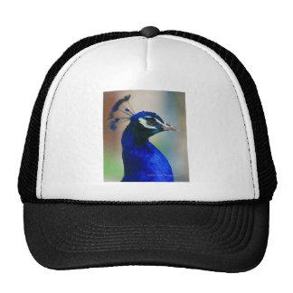pavo real azul vivo gorra