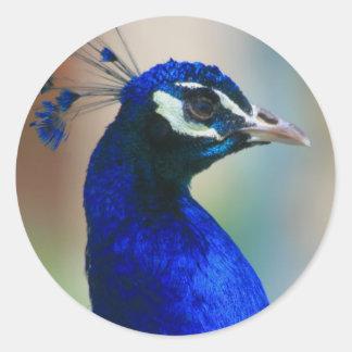 pavo real azul vivo pegatina redonda