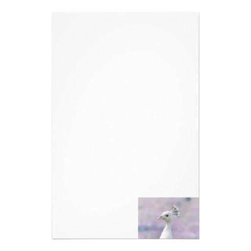Pavo real blanco del albino contra la parte poster papeleria