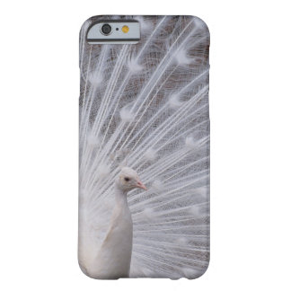 Pavo real blanco funda barely there iPhone 6