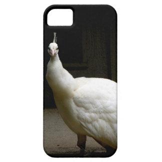 Pavo real blanco hermoso funda para iPhone SE/5/5s