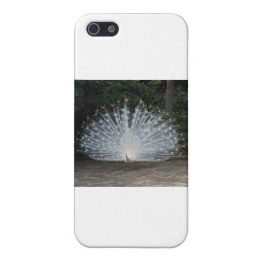 pavo real blanco iPhone 5 carcasa
