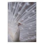 Pavo real blanco tarjetón
