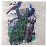 Pavo real bonito con el pájaro azulejos