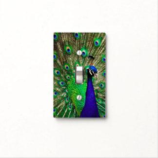 Pavo real brillante del verde azul tapas para interruptores