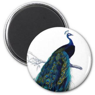 Pavo real colorido elegante azul del vintage imán redondo 5 cm