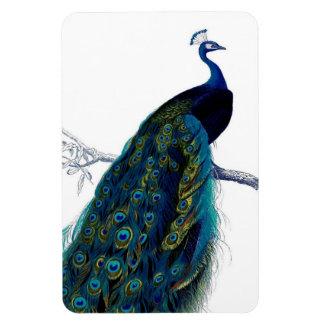 Pavo real colorido elegante azul del vintage iman de vinilo