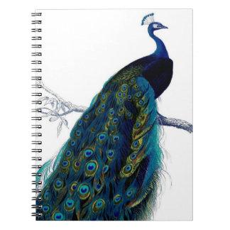 Pavo real colorido elegante azul del vintage libreta espiral