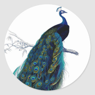 Pavo real colorido elegante azul del vintage pegatina redonda