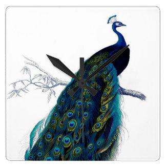 Pavo real colorido elegante azul del vintage reloj cuadrado
