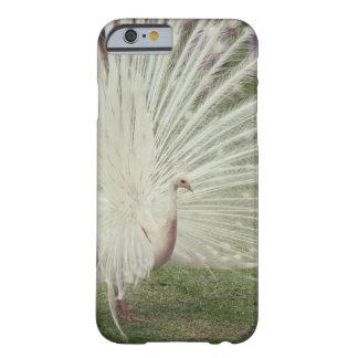 Pavo real del albino funda barely there iPhone 6