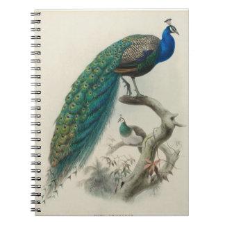 Pavo real del vintage cuaderno