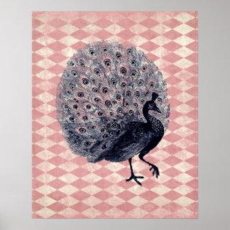 Pavo real del vintage en Argyle rosado Poster