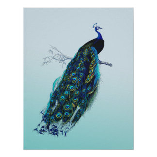 Pavo real del vintage posters