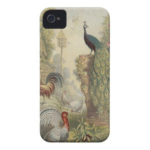Pavo real elegante del vintage y otros pájaros Case-Mate iPhone 4 cárcasa