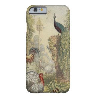 Pavo real elegante del vintage y otros pájaros funda para iPhone 6 barely there