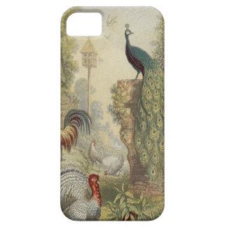 Pavo real elegante del vintage y otros pájaros iPhone 5 carcasa