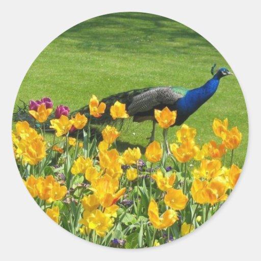 Pavo real en el jardín etiqueta redonda
