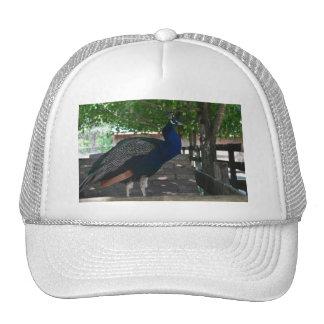 Pavo real en un tejado gorras de camionero