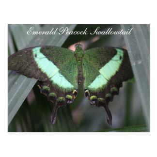 Pavo real esmeralda Swallowtail de la mariposa # 2 Postal