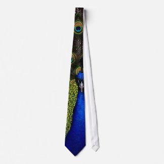 Pavo real espléndido corbata