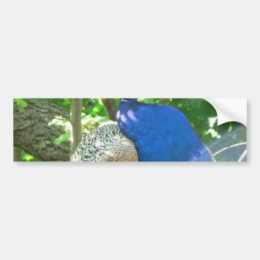 Pavo real etiqueta de parachoque