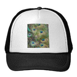 Pavo real gorras de camionero