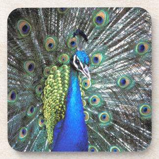 Pavo real hermoso que separa plumas coloridas posavasos de bebidas
