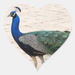 Pavo real imponente pegatina en forma de corazón