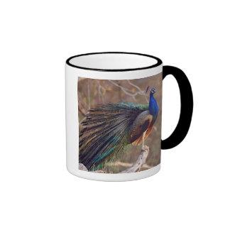 Pavo real indio con las plumas parcialmente taza de dos colores