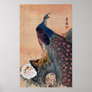 Pavo real japonés no.1 póster