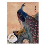 Pavo real japonés no.1 tarjeta postal