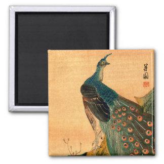 Pavo real japonés no.2 imán cuadrado