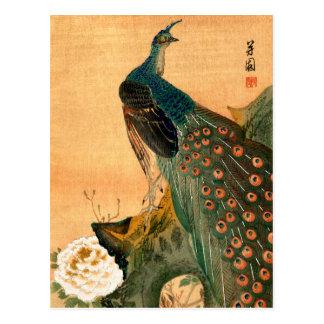 Pavo real japonés no.2 tarjetas postales