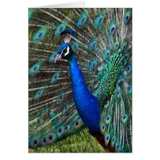 Pavo real masculino colorido tarjeta de felicitación
