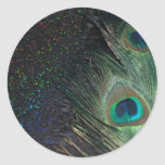 Pavo real negro del arco iris pegatina redonda