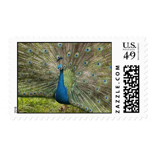 Pavo real orgulloso timbre postal