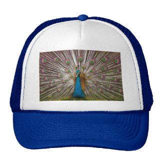 Pavo real pacífico gorras