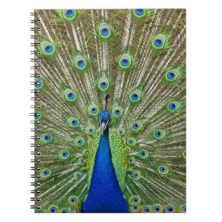 Pavo real que muestra sus plumas libretas espirales