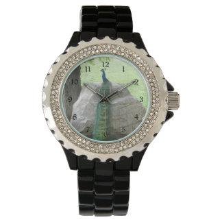 Pavo real relojes
